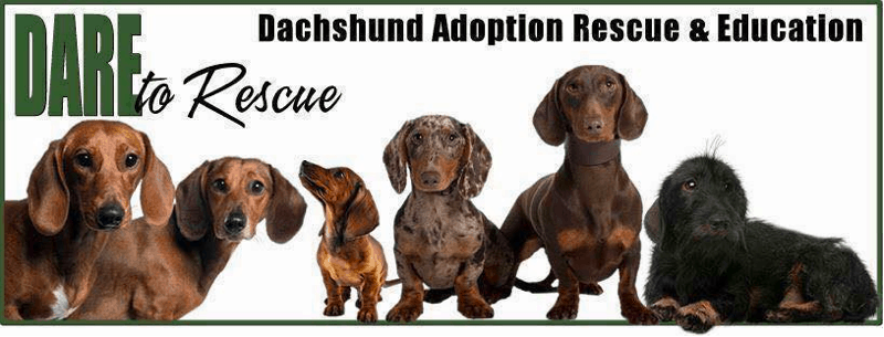 Dachshund Adoption Rescue and Education