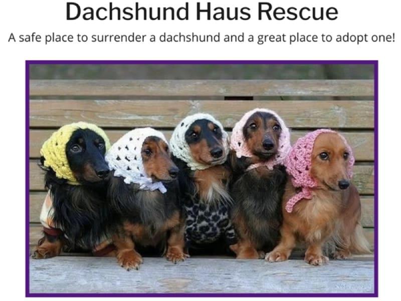 Dachshund Haus Rescue
