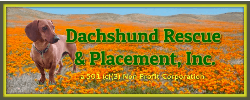 Dachshund Rescue Placement