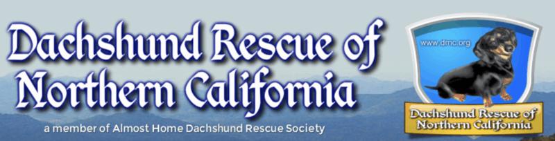 Dachshund Rescue of Northern California
