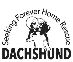 Dachshund Seeking Forever Home Rescue