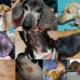 common dachshund skin problems