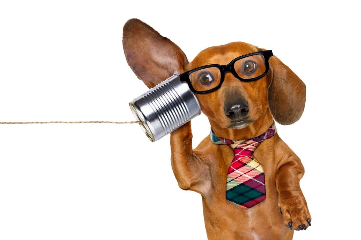 Dachshund Communication