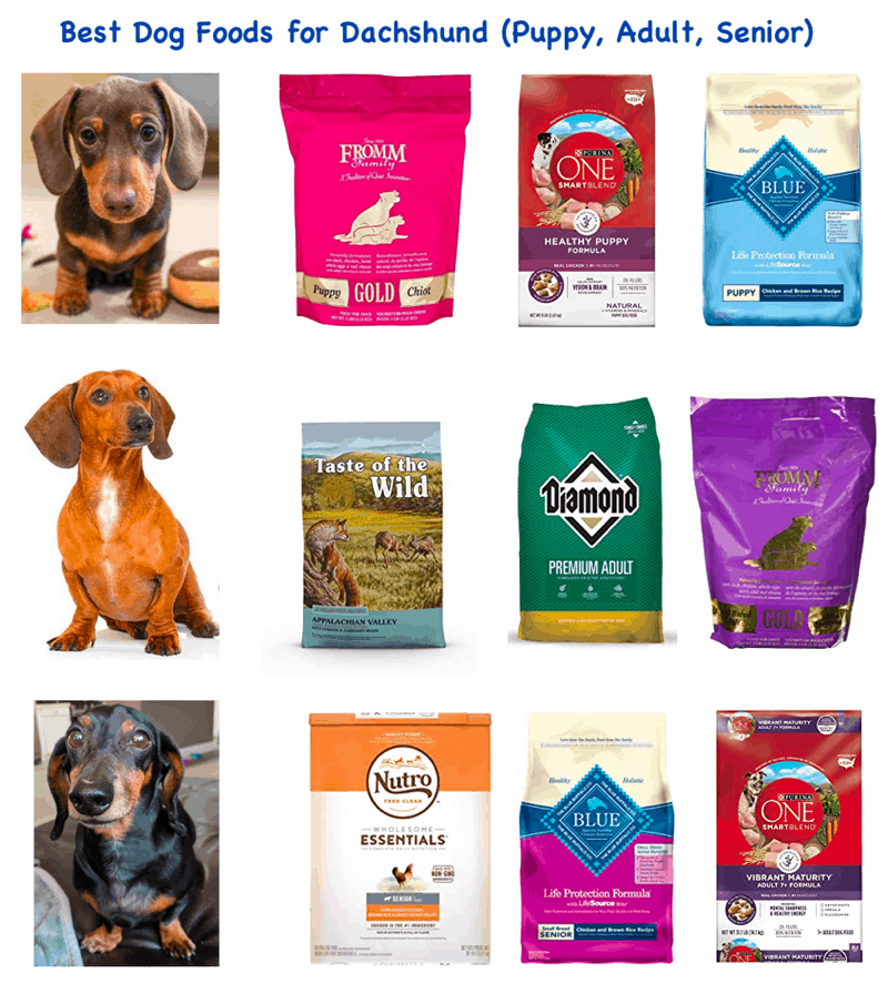 Dog Foods for Dachshund