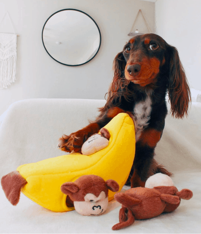 Dog Toys for Dachshund