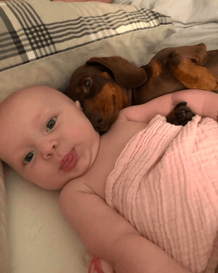 Are Dachshunds Good With Babies