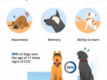 dog cognitive dysfunction