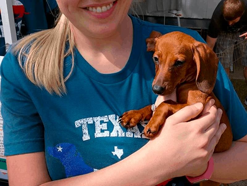 Adopt a dachshund