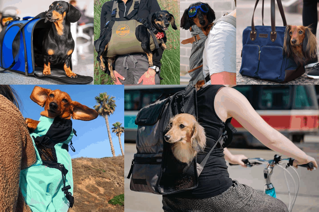 Best Dachshund Carriers and Backpacks