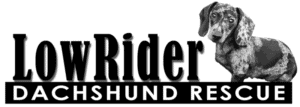 LowRider Dachshund Rescue