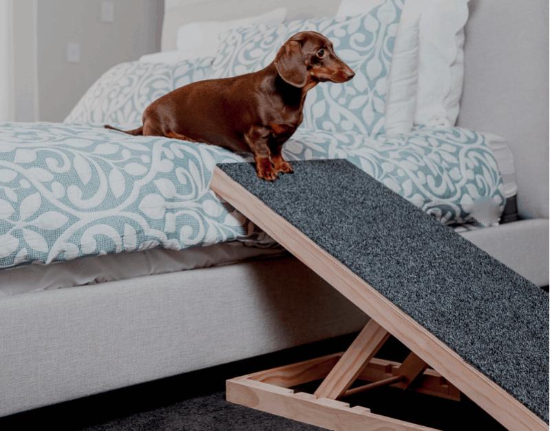 Bed dog ramp for Dachshund