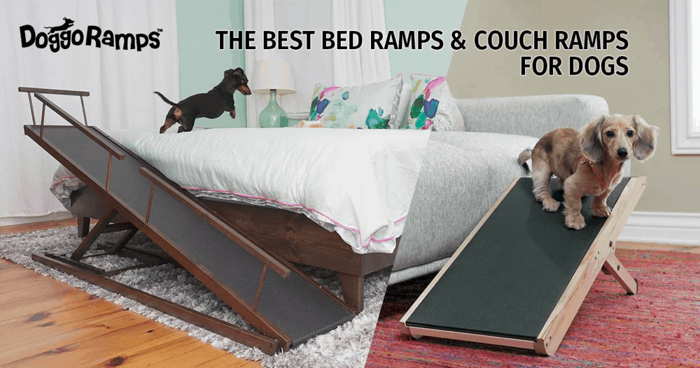 Best Dog Ramps for Bed and Couch