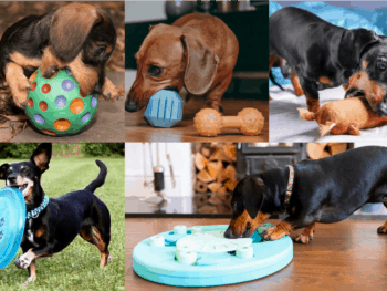 Best Dog Toys For Dachshund