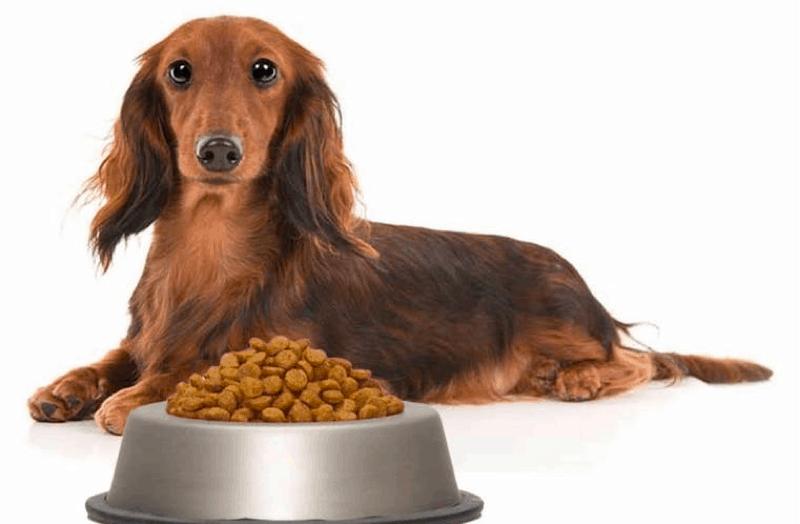 Best dog food for adult Dachshund