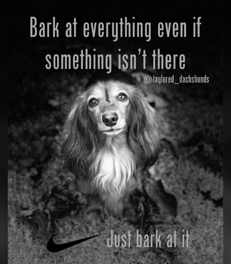 Dachshund Bark A lot