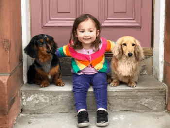 Are Dachshunds Good With Kid