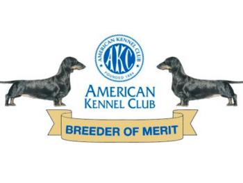 Best Dachshund Breeders