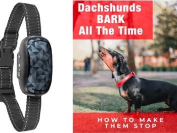 Best Dog Bark Collars for Dachshunds
