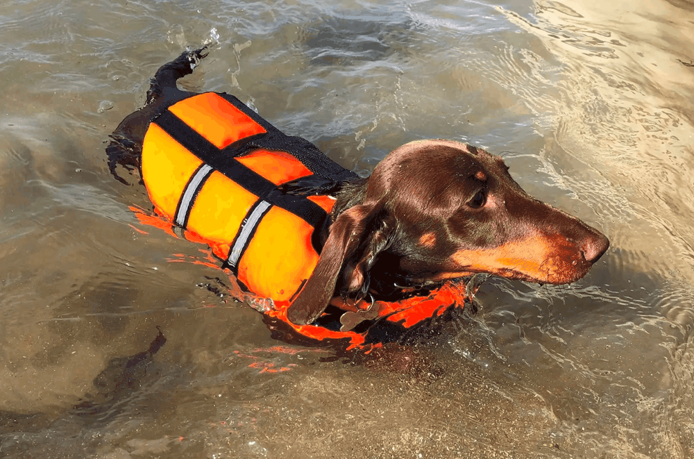 Best Life Jacket for Dachshunds