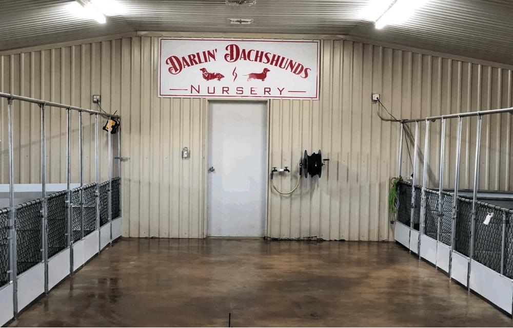 Breeder Darling Dachshund in Texas