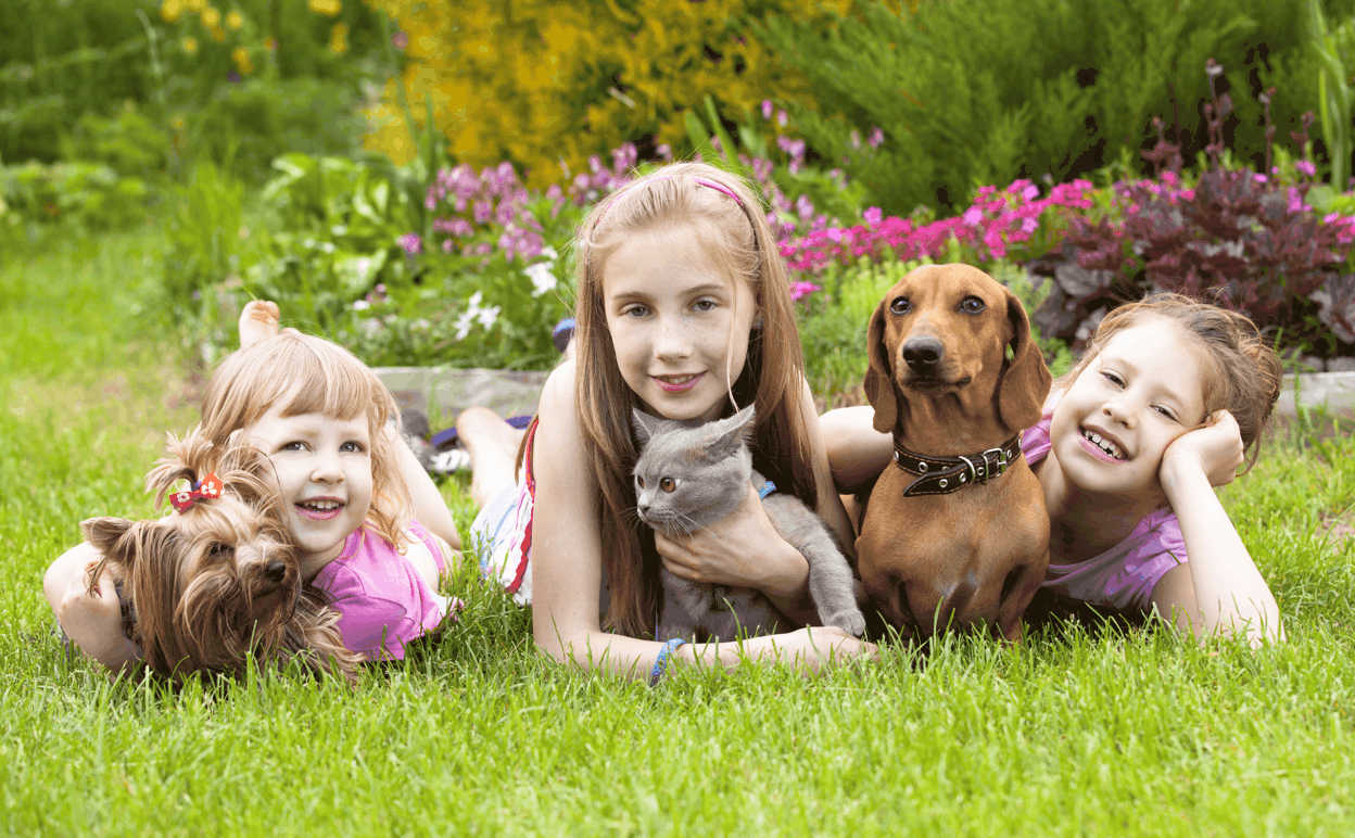 Dachshund Good for Family with Children