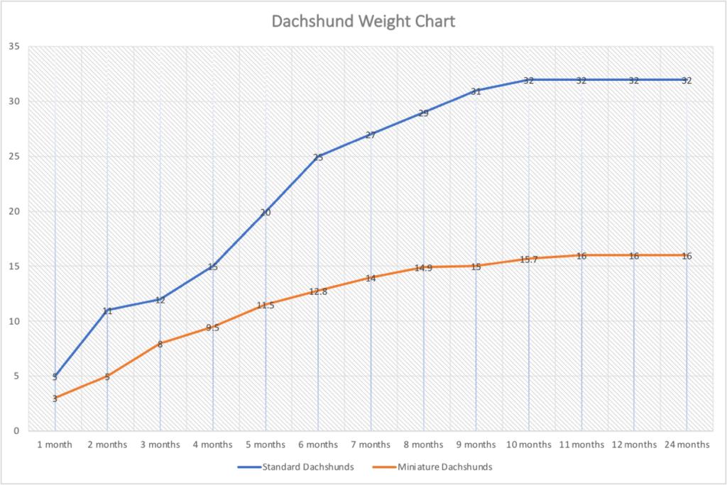 Dachshund Weight Chart
