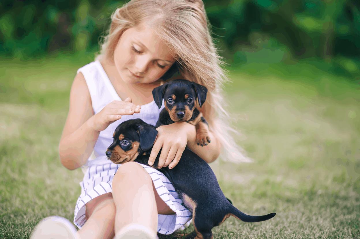 Dachshund is Friendly Towards Children