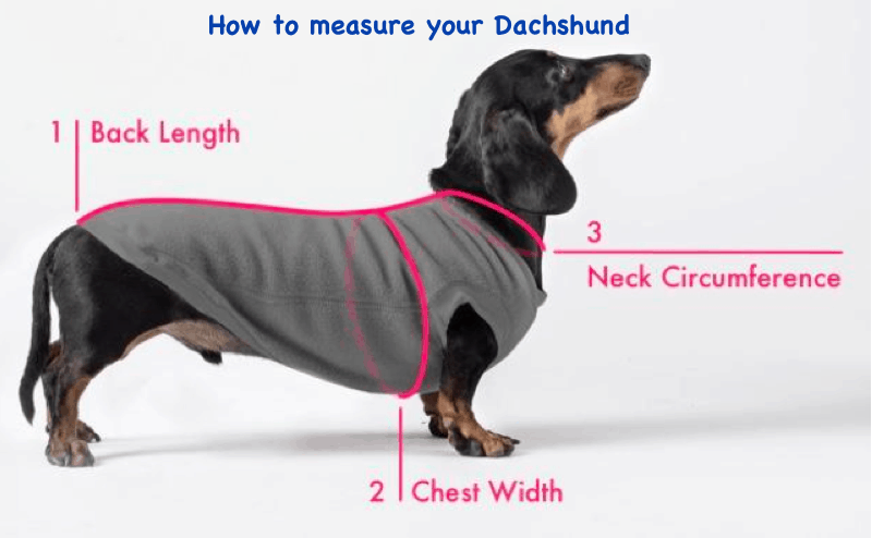 How to Measure your Doxie