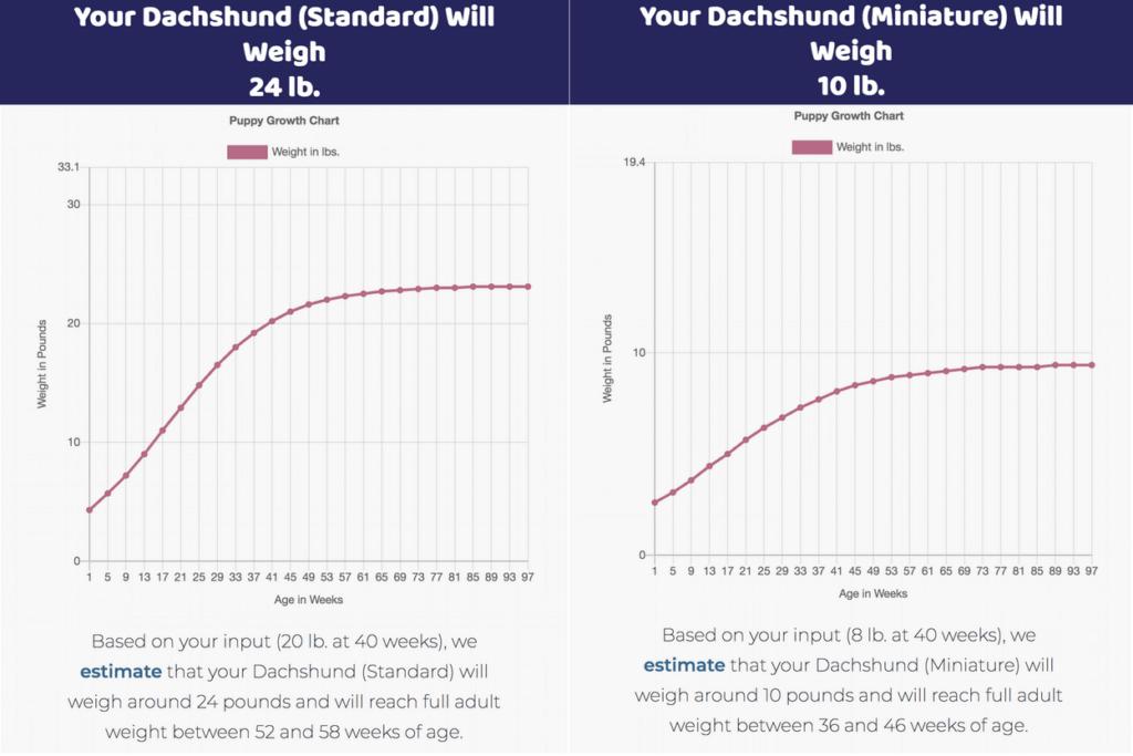 dachshund growth chart
