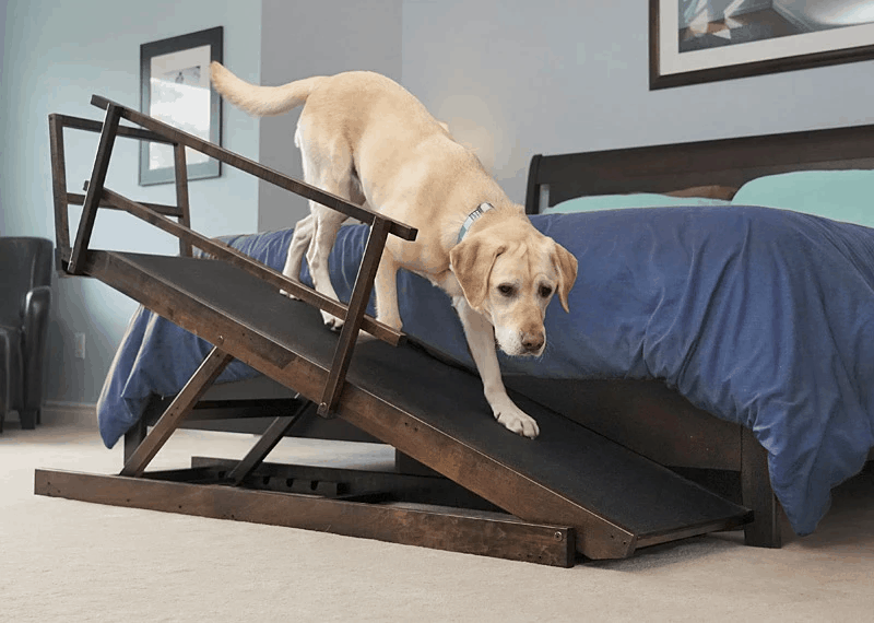 Best Bed Ramp for Large Dogs