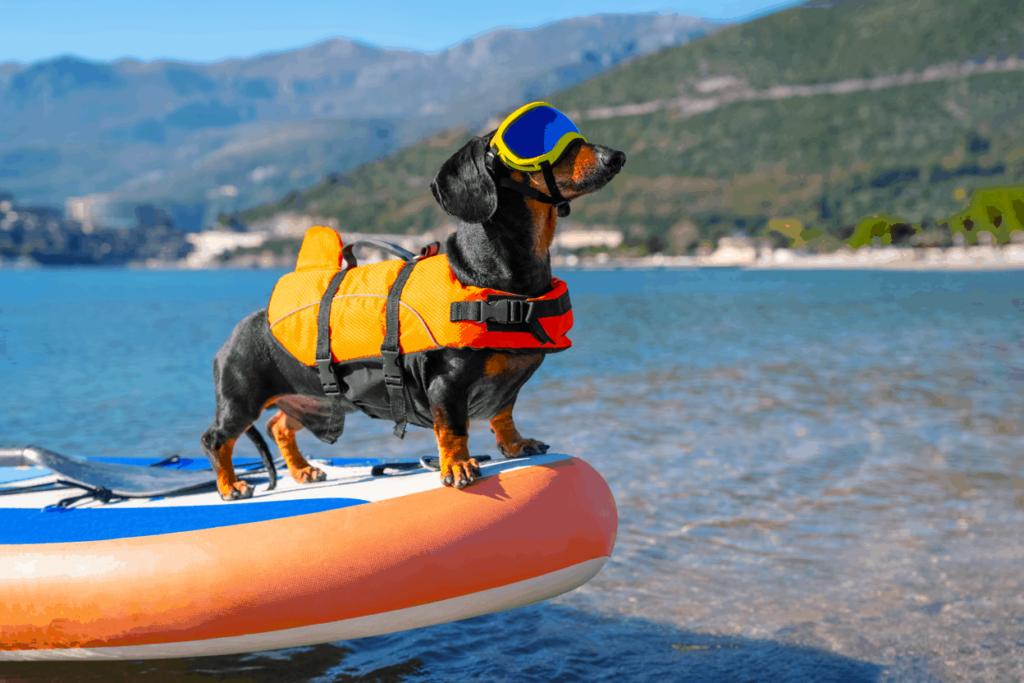 Best Dachshund Life Jacket