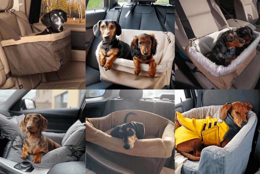 Best Dog Car Seats for Dachshund