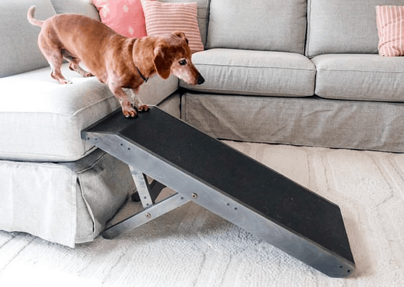 Best Dog Ramp for Couch