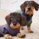 Best Dachshund Coats and Sweaters