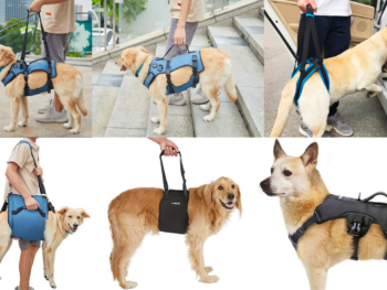 Best Dog Lift Harness and Sling