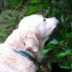 Can Dogs Eat Dried Mulberries