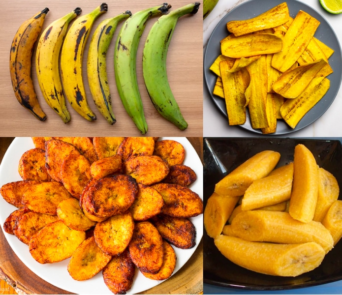 Can dogs have Plantains