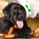 can dogs eat sausages